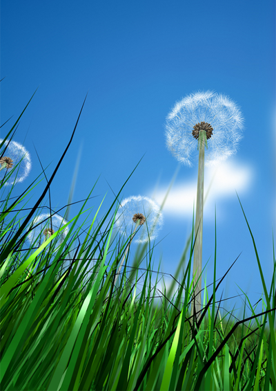 Dandelion Greens – the Weed that's Healthy and Tasty too!